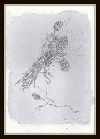 #459 silverpoint dry flowers.jpg