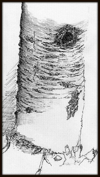 drawing bark