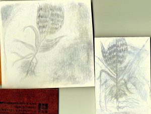 Silverpoint practice feather