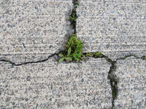 cracked-concrete-degraded-weeds-growing-cracks-89662114